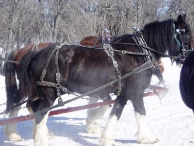 Nice looking horses